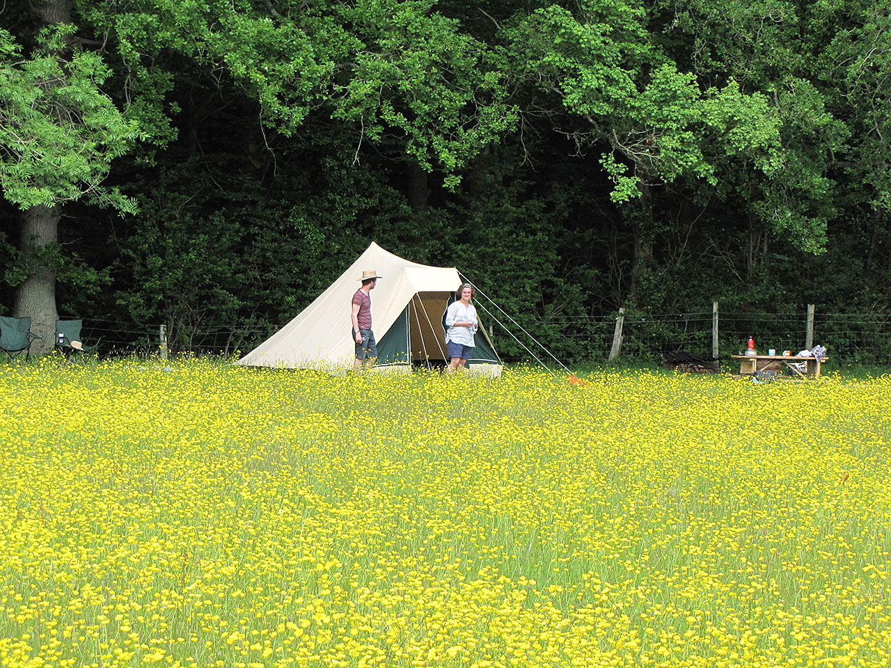 Buttercup camping pitch at Experience Sussex
